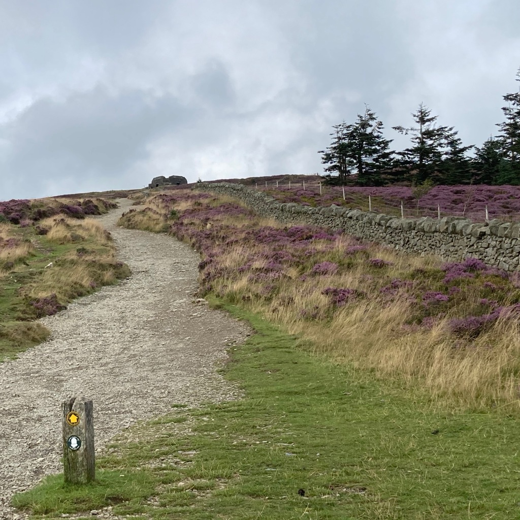 A stony path winds its way uphill to the remains of a monument. There is a wayeinder's marker next to the path and heather on each side. A dry stone wall is on the right, with more heather and a line of fir trees behind it.